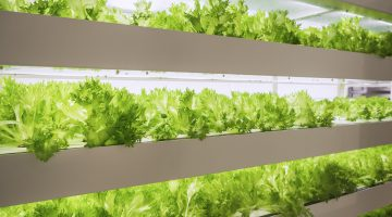 Greenhouse Plant row Grow with LED Light Indoor Farm Agriculture Technology vertical farming