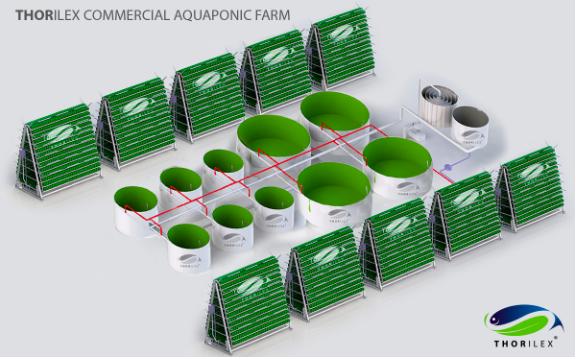 THORILEX Aquaponics