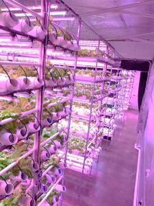 Indoor Vertical Farm Caribbean
