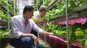 Puerto Rico Vertical Farm Food Production