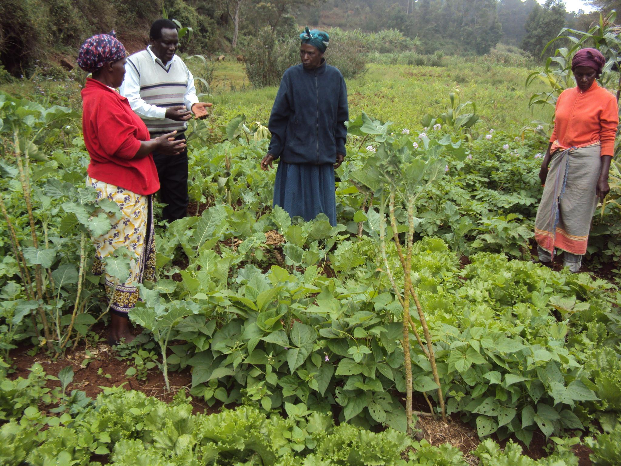 Organic fertiliser and pest control