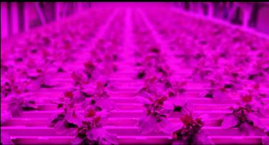 Fraunhofer IME vertical farm
